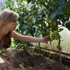 Jak správně hnojit zeleninu