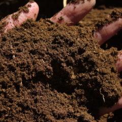 Rašelino písčité komposty
