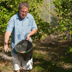 Hnojíme okrasné stromy a keře