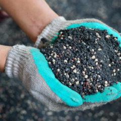 Zapomenuté způsoby hnojení – hnojení hořčíkem