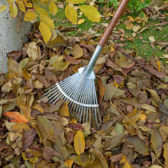 Hnojení ovocných stromů můlčováním