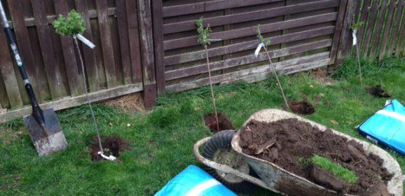 Hnojení jabloní, hrušní a drobného ovoce