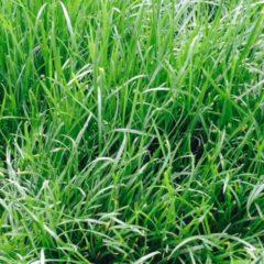 Jak udělat hezký okrasný trávník ?
